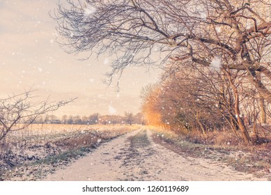 Snow falling on a countryside road in the winter with barenaked trees by the roadside