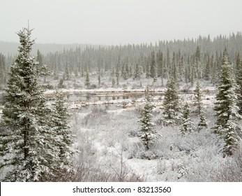 Snow falling on marshland pond and boreal forest (taiga) of Yukon Territory, Canada.