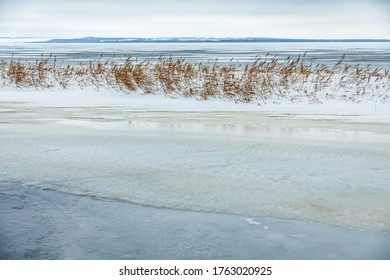 Snow fell on the dry yellow grass by the river. Beautiful winter landscape. Bank of the river after the first snowfall. Dry grass in the snow near the pond.