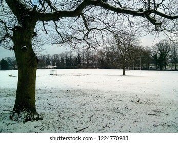 Snow , Field , Trees , Polamhall School , Darlington