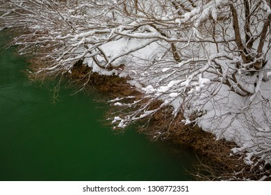 Snow fill on top of the tree and beautiful green river on background.