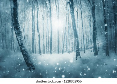 snow flakes falling in forest in winter