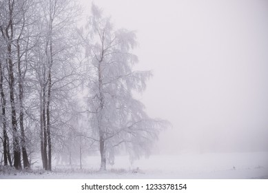 snow  in the forest with fog, winter background