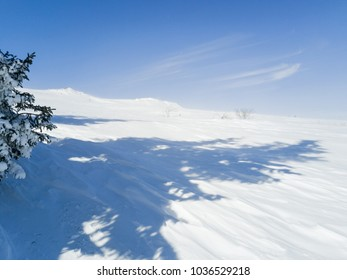 Snow Forest in Mountain