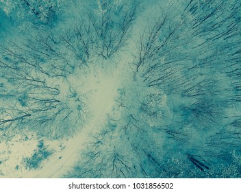 Snow forest view from above