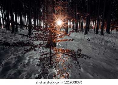 Snow in the forest and a warm sunset