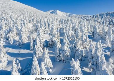 Snow forest in winter season; Zao mountain; Zao; Yamagata ; Tohoku ; Japan