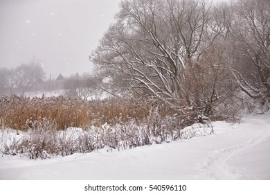 Snow and frost on cane on a frozen misty river. Overcast snowy weather.