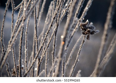The snow and frost on plants in cold winter day