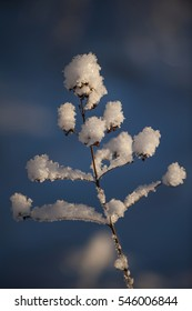 The snow and frost on plants in winter