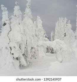 Snow Ghost in  Sun Peaks, Kamloops, British Columbia, Canada