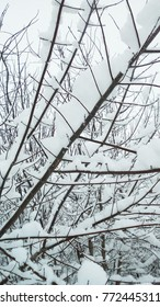 Snow and hoarfrost on tree branches in winter