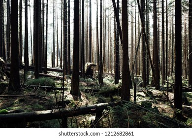 Snow holes in the dense forest