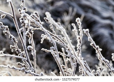 snow and ice covered dead grass in winter season, beautiful nature and specific features of winter weather in the wild