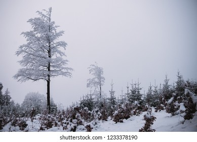 snow and ice in the forest, Winter background