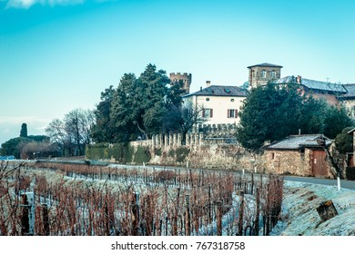 snow and ice in the vineyard of Friuli, Italy