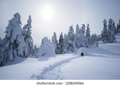 Snow igloo in mountain forest. Adventure winter tour. Foggy landscape with fir trees in the snow