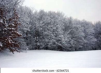 snow inside a local park