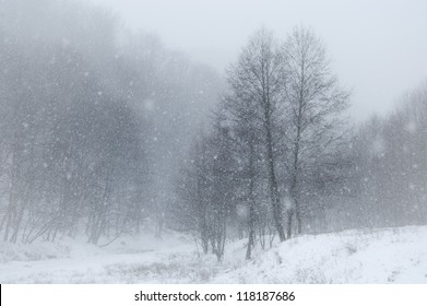snow in landscape with trees