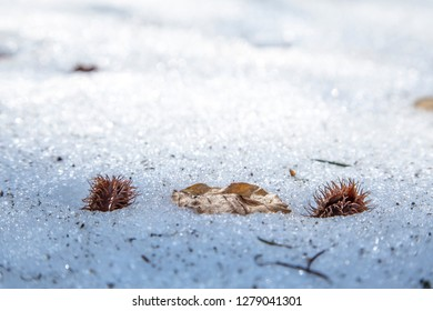 Snow and leaves in the Navarrese Pyrenees in Spain