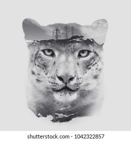 snow leopard irbis head with double exposure effect