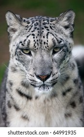 Snow Leopard Wildlife Heritage Foundation