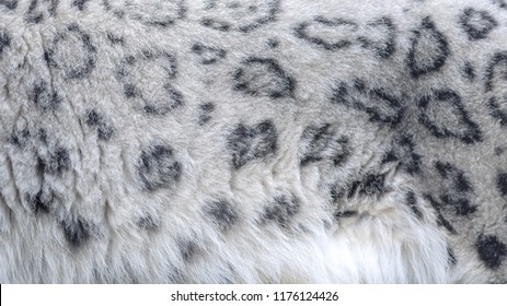 A snow leopard's fur featuring its spots