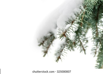 snow lies on a branch of a blue spruce