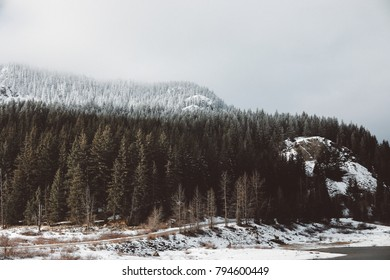 The snow line in the Cascade Mountains in Washington