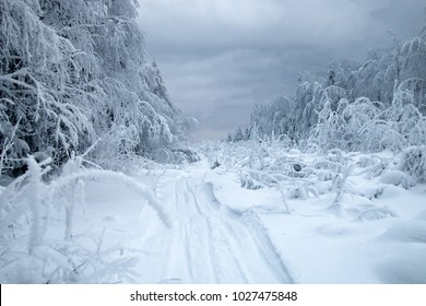 Snow logging road in Siberian snow-covered and frosty forest. Tree branches bent under weight of snow and hoarfrost. Siberia as endless and cold country without roads, interminable forests and swamps