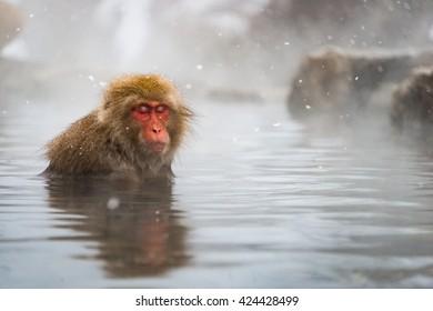 Snow Monkey bath in Onsen