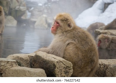 snow monkey at the center of the mountain at Nagano in Japan. A traditional monkey sitting on the edge of hot spring. Red face spider monkey. beautiful monkey enjoying a hot bath in winter