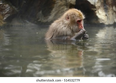 snow monkey with hot springs in nagano japan