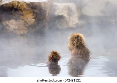 Snow monkey at Jigokudani hot springs, nagano(prefectures),tourism of japan