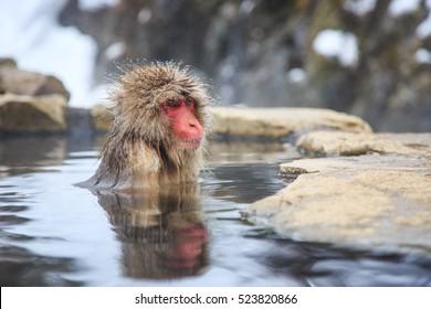 Snow monkey at a natural onsen (hot spring), located in Jigokudani Park, Yudanaka. Nagano Japan.