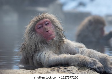 A snow monkey relaxes in a hot spring