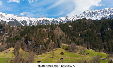 The snow mountain behind green forest and small houses view from Lauterbrunnen station, Switzerland