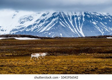 Snow mountains and Nature of the Svalbard archipelago