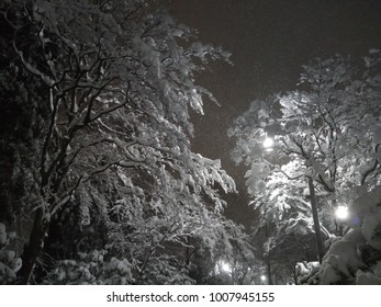 Snow at noght