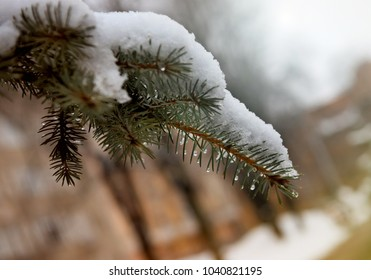 Snow on a beautiful branch in winter.