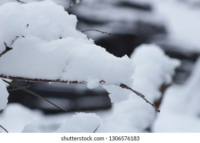 Snow on the branches