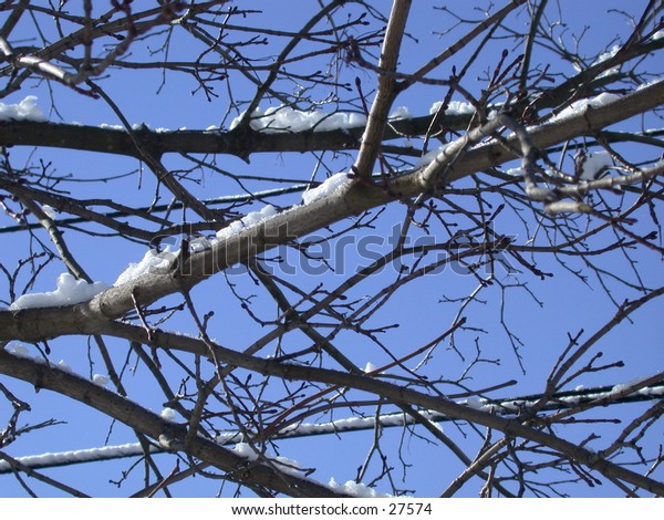Snow on branches, with a bright blue background