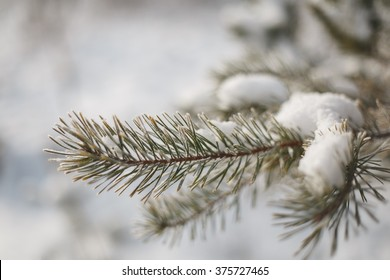 The snow on the branches of a tree