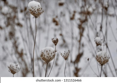 Snow on the dried grass backgrounds