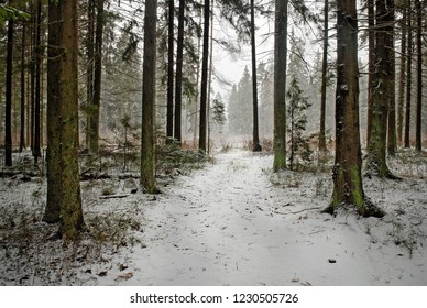 snow on the forest earth road