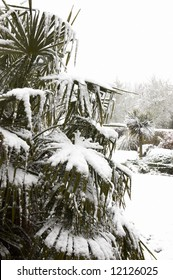 Snow on the fronds of a palm tree