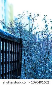 Snow on my terrace