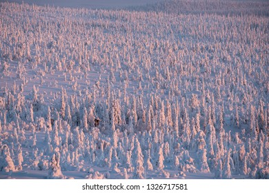 Snow packed trees endlessly in riisitunturi national park with Riisitunturi cottage within the trees in Posio, Finland