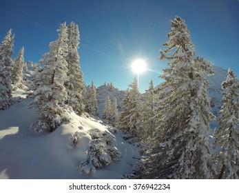 snow paradise