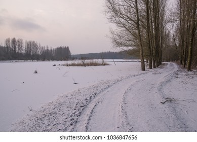 Snow path in the Forrest